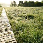 Vakantie 2021- dierenplezier - Everbeekse bossen